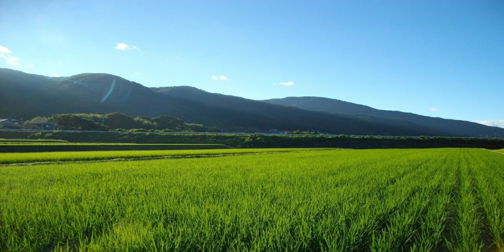 京都丹波の里はらだ自然農園 自然農法で無農薬米を育てる