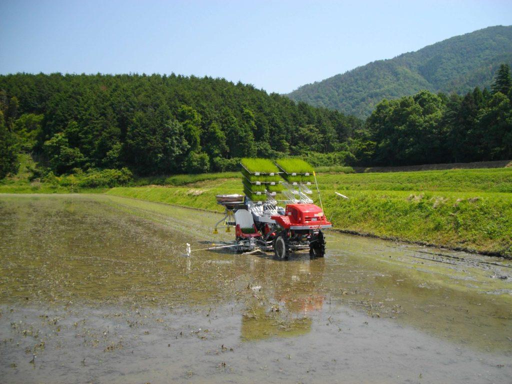 無農薬田と田植え機