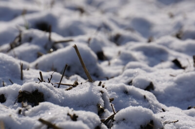 自然農法無農薬の田んぼに積もった雪