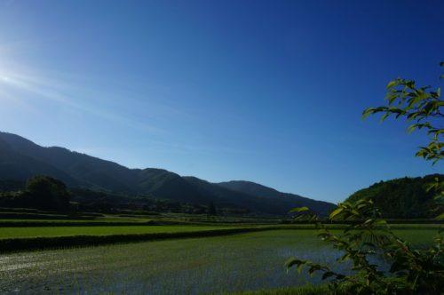 大雨の後の田んぼ1