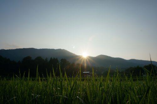 京都丹波の里はらだ自然農園(自然農法無農薬栽培の田んぼ)