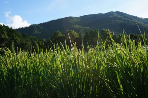 京都丹波の里はらだ自然農園 9月7日撮影